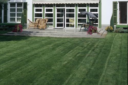 Trawnik - aksamitny dywan