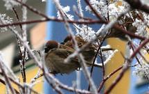 Jesienią pamiętaj o karmniku lub budce dla ptaków. One będą ci wdzięczne