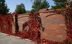 Ogrodzenia murowane z cegieł klinkierowych, licowych oraz cegieł ręcznie formowanych. Galeria pomysłów