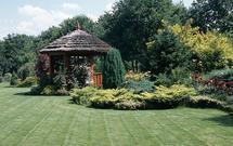 Krzewy iglaste w twoim ogrodzie. Pielęgnacja iglaków i krzewów zimozielonych