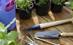 Jak uprawiać warzywa na balkonie? Najlepsze gatunki i odmiany roślin