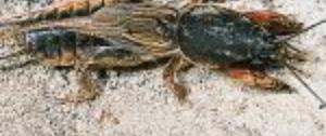 Jak walczyć z turkuciem podjadkiem - sposoby na turkucia