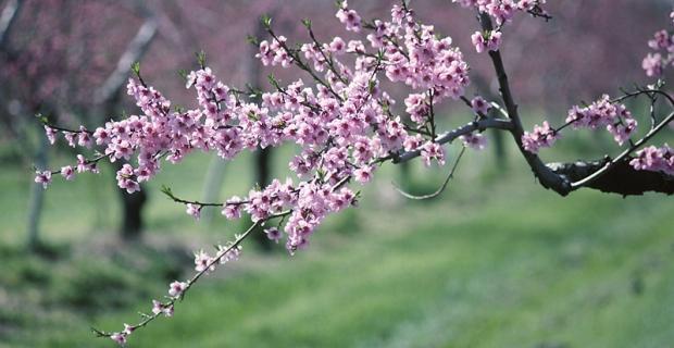Wiosna zgodnie z planem