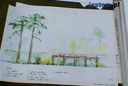 Projektowanie ogrodu. Jak założyć ogród